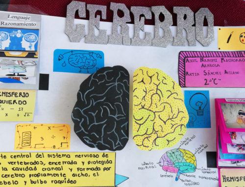 Concluye IMM celebración del Mes del Cerebro